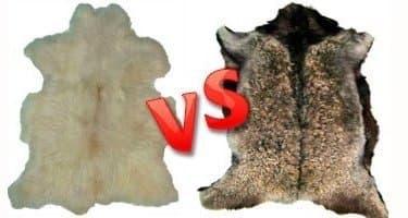 В чем отличия овечьей шкуры от козьей